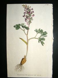 Curtis 1793 Hand Col Botanical Print. Solid Rooted Fumitory 231